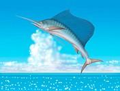Illustration of a Sailfish