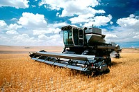Custom harvest combine harvest wheat near Cheyenne, WY