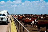 Feed truck loads troughs at Monfort Beef feedlot, near Greeley, Colorado