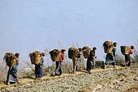 Women carrying baskets up a hill in rural Bhutan. The women are all wearing a traditional costume called ´kira´ which is a woven wrap dress made from ...