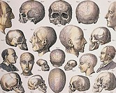 Phrenology. Historical artwork depicting skulls and heads explaining the pseudo-sciences of phrenology and physiognomy. Phrenology was based on the mi...