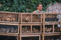 Man standing behind chicken poultry cages, Majorca, Balearic Islands, Spain