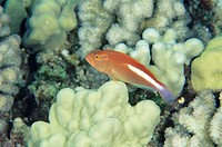 Fish among coral reef in ocean