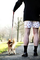 Businessman in boxer shorts walking his dog