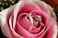 Pink Rose and Wedding Rings