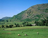 Mountains, Farmhouse and Sheep, Lake District, Cumbria, England