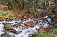 Creek and beechwood in autumn, Gresilhon, Artiga de Lin valley. Vall d´Aran, Catalonia, Spain