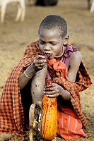 Maasai ritual. Eating coagulated blood. Tanzania