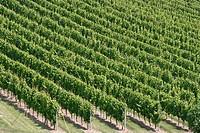 Vineyards, Okanagan Valley. British Columbia, Canada