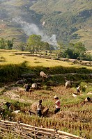 Northern Vietnam, Sapa Region, Lao Chai Valley, Black Hmong daily life