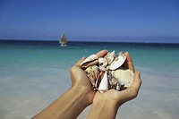 Person's hands holding seashells at the beach