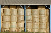 Bales of hay in shed