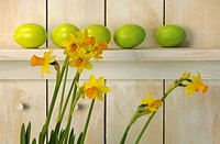 Green Easter eggs lying on shelf with daffodils