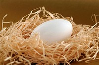 Egg in straw nest, close-up