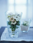 Anemones in a glass