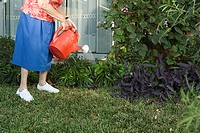 Senior woman watering the garden (thumbnail)