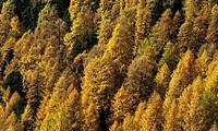 europe, italy, trentino alto adige, wood, autumn