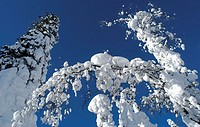 europe, finland, lapland, kuusamo, winter