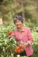 Portrait of mature woman picking tomatoes out of garden