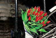 The Netherlands, Red tulips bouquet