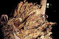 Los Vinales, tobacco leaves drying