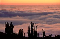Chile, Pan de Azucar national park, 'camanchaca', coastal mist