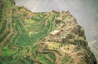 Yemen, Shahara, qat and sorgho fields