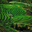 China, Yunnan, terraced field