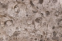 Fossiliferous-Limestone-Adams,-New-York