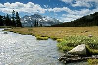 Mammoth-Peak-&-Kuna-Crest,-alpine-Stream-&-Meadow,-Tioga-Pass,-Yosemite-NP,-CA