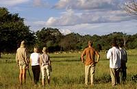 Nature Trail, Impala, Mala Mala Reserve, Mpumalanga, South Africa