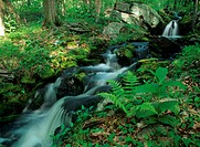 Klienhan´s-Run,-a-Creek,/nSpringtime,-Pocono-Mts.,-PA