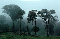 Tropical-Cloud-Forest,-Monteverde-Cloud-Forest-Reserve,-Costa-Rica,-C-America