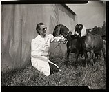 Photograph by Stephens (Daily Herald staff photographer) of Elizabeth Rochford of Little Berkhampstead with two prize-winning Anglo-Nubian goats at B...