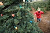 Boy approaching christmas tree