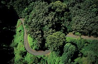 Road  on mountain slope covered with greenery, aerial view, Hawaii, USA
