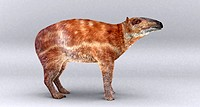 Palaeotherium. Artist´s impression of the extinct mammal Palaeotherium. This genus lived during the Eocene and Oligocene epoch between 54 and 23 milli...
