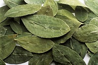 Dried coca leaves. The leaves of the coca plant (Erythroxylon coca) contain the stimulant chemical cocaine. The leaves can be chewed to produce a mild...