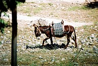 Donkey with a saddle on its back
