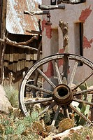 Broken wheel and cactus plants
