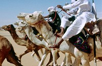 Tuareg camel race for the Sebiba festival. Tassili N´Ajjer. Sahara. Algeria.