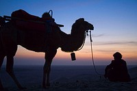 Silhouette of camel caravan in desert at sunrise