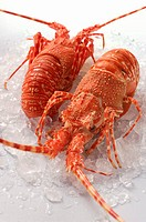 Two spiny lobsters on crushed ice