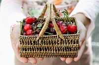 Hands holding basket of red cherries