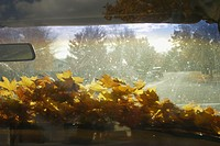 Fall leaves on car windshield