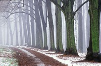 Small way through trees, Chemnitz, Saxony, Germany