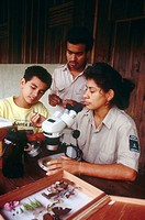 Parataxonomists showing insect to trainee. Tropical rainforest, Costa Rica