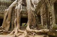 Ta Prohm, one of the temples of Ankor, Cambodia
