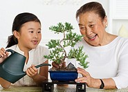 Granddaughter Helping Grandmother Tend Bonsai Tree