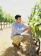 side profile of a mid adult man examining plant at a vineyard